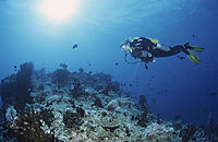 Asien, Republic of Maldives, island, North Male Atoll, diver at a reef hook in 50 feet under the surface in the current, blue water, background, HP reef, Indic Ocean,
