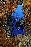Africa, egypt, red sea, diver in a sea fan coral covert cave access, entrance, diver at colorful softcoralreef, softcorals, reef, corals, coralreef, wonderful, yellow, pink, purple, red, orange, white, reef, diver at softcoralreef, Elphinestone, Elphinsto