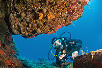 Asia, Turkey, Dalaman, Fethiye, diving, cavediving, cavediver, entrance of a cave, rocks covered with sponges and corals