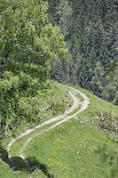 Europe, Italy, South Tyrol, Trentino-Alto Adige, Eisack Valley, forest road, meadow road, offroad, mountain path,