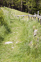 Europe, Italy, South Tyrol, Trentino-Alto Adige, Eisack Valley, forest road, meadow road, offroad, mountain path, hiking trail, footpath, linear walk, wooden frence, hoarding, board fence