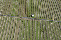 Europe, Italy, South Tyrol, Trentino-Alto Adige, Eisack Valley, road crossing a plantation, apple plantation, spring