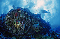 Africa, Egypt, Red Sea, diver above the shipwreck of the Aida II at north point of Brother islands, wreck, parts of a shipwrack
