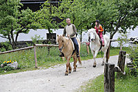 Europe, Slovenia, Alps, sports, horse riding in Studor, Bohinj Lake, two horses on a gravel path