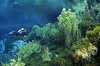 Oceania, New Zealand, South Pacific, South Island, Pupu Springs, To Waikoropupu, Takaka, Golden Bay, taonga, treasure, waahi tapu, sacred place, freshwater, freshwaterdiving, diving, diver in crystal clear water, green underwater plants