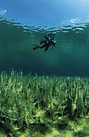 Europe, Germany, Bavaria, isar springs, freshwater, fresh water, coldwater, algea, algas, snorkeler in a algea lake