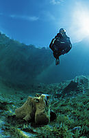Europe, Austria, Tyrol, Lake Lechau, diver against sunlight, crystal clear fresfwater, fresh water, coldwater