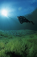 Europe, Austria, Tyrol, Lake Lechau, diver against sunlight, crystal clear freshwater, fresh water, coldwater