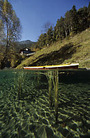 Europe, Austria, Tyrol, lake Fernstein, freshwater, fresh water, coldwater, boat in shallow water, reed, splitimages, split images