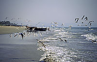 Asia, India, seagulls, sea, waves, beach, fisherman, fishingboats