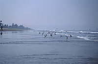 Asia, India, fisher, morning mood at the beach of Goa