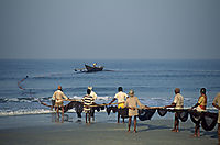 Asia, India, fisher, nets, netfishing