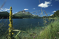 Europe; Switzerland; East Switzerland; Oberengadin; lake Silvaplaner, St. Moritz, mountain lake diving, sunny day in the alps