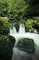 Europe, Slovenia, Alps, karst, julian alps, moss-grown stones in a creek, stream, savica wellspring, fountain, mossy stones
