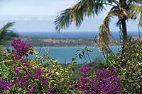 Africa; Mozambique; Tofo Beach, Inhanbane, indic ocean, Bougainvillea at the beach